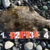 2018/01/20(土) 中潮 釣果:ヒラメ(1匹 53㎝)