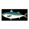 魚種別 釣行日記 & 動画