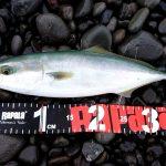 2018/09/29(土) 中潮 釣果:イナダ(40cm 1匹)・クロヒラアジ(25cm 1匹)